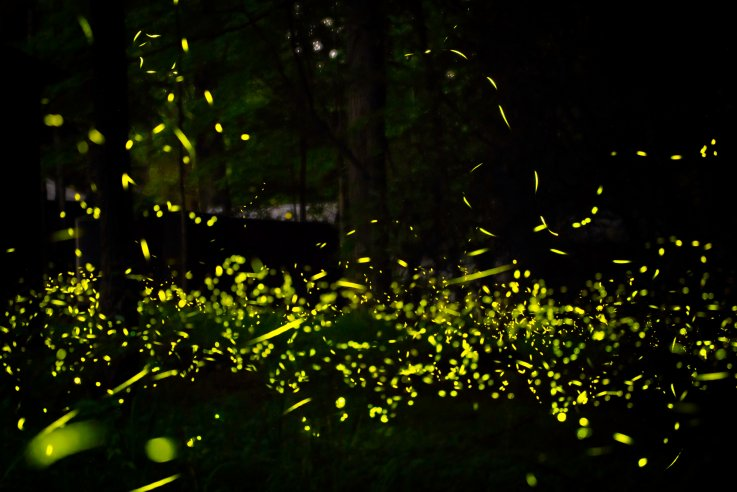 cul-map-otherworldly-synchronous-fireflies