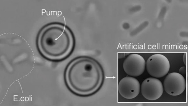 artificial-cells-mimic-vital-functions-of-biological-cells-353487